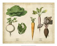 "22"" x 18"" Vegetable Pictures"