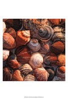 """Shell Yes by Danny Head - 13"""" x 19"""""""