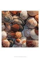 """What the Shell by Danny Head - 13"""" x 19"""""""