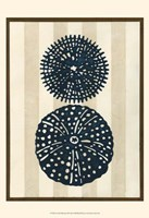 "Sea Life Silhouette II by June Erica Vess - 13"" x 19"""