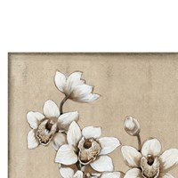 White Orchid I Fine Art Print