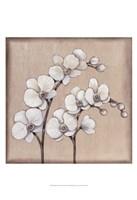 White Orchid II Fine Art Print