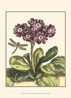 """Garden Vignette IV by Johann Derby - 10"""" x 13"""""""