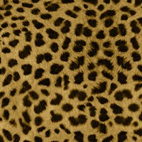 "12"" x 12"" Cheetah Prints"