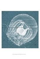 "Coastal Menagerie IX by Vision Studio - 13"" x 19"""