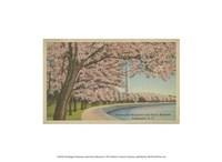 Wash. Monument & Cherry Blossoms Fine Art Print