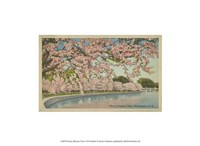 """13"""" x 10"""" Cherry Blossom Pictures"""