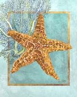Starfish and Coral Fine Art Print