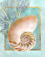 Nautilus Shell and Coral Framed Print