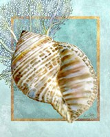 Turban Shell and Coral Fine Art Print