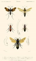 Antique Bees I Fine Art Print