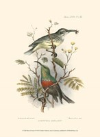 Birds in Nature I Fine Art Print