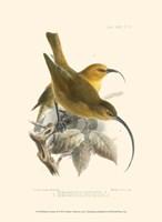Birds in Nature II Fine Art Print