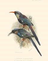 Birds in Nature III Fine Art Print
