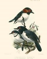 Birds in Nature IV Fine Art Print