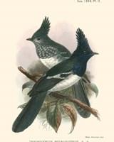 Birds in Nature V Fine Art Print