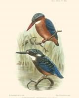 Birds in Nature VI Fine Art Print