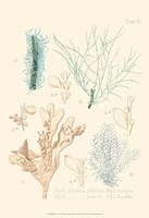 Delicate Coral I Fine Art Print