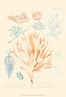 Delicate Coral IV Fine Art Print