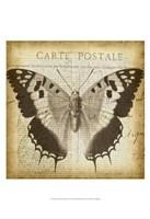 """Carte Postale Butterfly II by Jennifer Goldberger - 13"""" x 19"""""""
