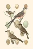 British Birds and Eggs I Fine Art Print