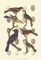 British Birds and Eggs III Fine Art Print