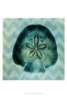 "13"" x 19"" Sand Dollar Pictures"