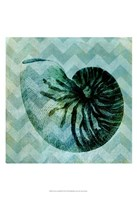 Chevron Shell IX Fine Art Print