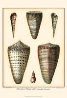 Redoute Shells I Fine Art Print