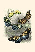 """Butterfly Sanctuary I by Vision Studio - 13"""" x 19"""""""