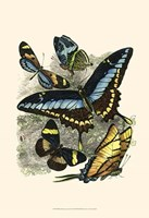"""Butterfly Sanctuary II by Vision Studio - 13"""" x 19"""""""