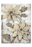 "Poinsettia Study II by Timothy O'Toole - 13"" x 19"""
