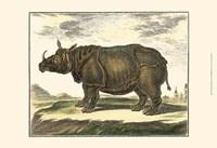 """19"""" x 13"""" Rhinoceros"""