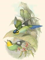 Small Birds of Tropics I Fine Art Print