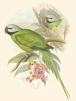 Small Birds of Tropics II Fine Art Print