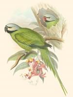 Small Birds of Tropics II Fine Art Print
