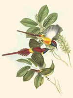 Small Birds of Tropics III Fine Art Print