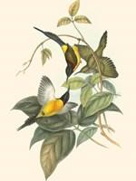 Small Birds of Tropics IV Fine Art Print