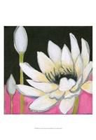 Bliss Lotus III Framed Print