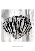 Black Shell II Fine Art Print