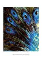 """Feather II by Danielle Harrington - 10"""" x 13"""""""
