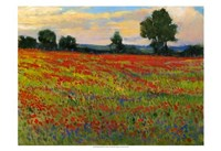 """Red Field II by Timothy O'Toole - 19"""" x 13"""""""