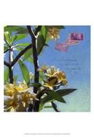 Plumeria & Postage IV Fine Art Print