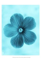 Forget Me Not Blue II Fine Art Print