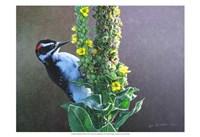 Woodpecker Mullen Fine Art Print