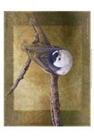 "Nuthatch by Chris Vest - 13"" x 19"" - $12.99"
