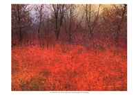 """Red Grass I by Chris Vest - 19"""" x 13"""""""