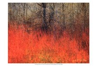 """Red Grass II by Chris Vest - 19"""" x 13"""""""