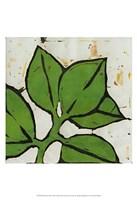 Planta Green III Fine Art Print