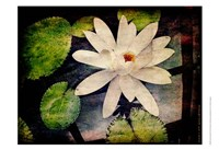"Lily Ponds III by Robert McClintock - 19"" x 13"""